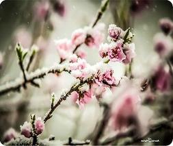 Cherry Blossom With Snow Mouse Pad