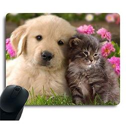 Grey Baby Cat Gold Dog Golden Puppy Cuddle Close Together Lo