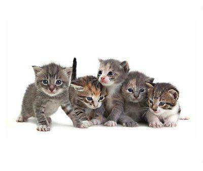 Cute Kittens Thick Mouse Pad
