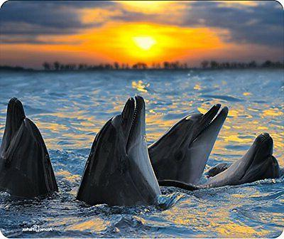 Dolphins At Sunset Mouse Pad
