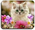 Art Plates brand - Kitten in the Flowers Mouse Pad