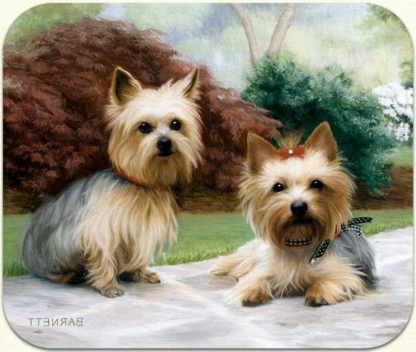 Yorkie On Porch Mouse Pad by Fiddler's Elbow - M24FE